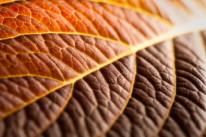texture in photography